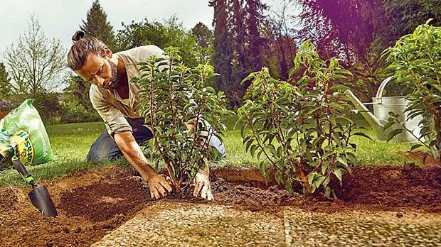 man aan het tuinieren
